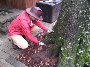Tree growth regulator 1